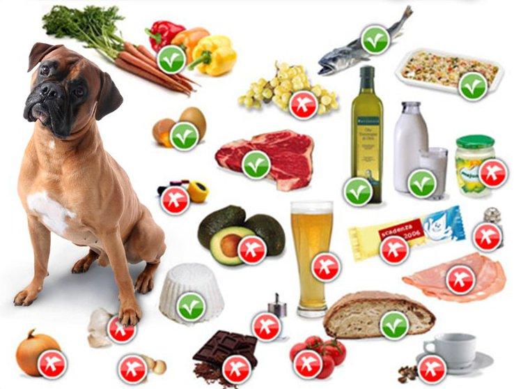 Cibi pericolosi per cani