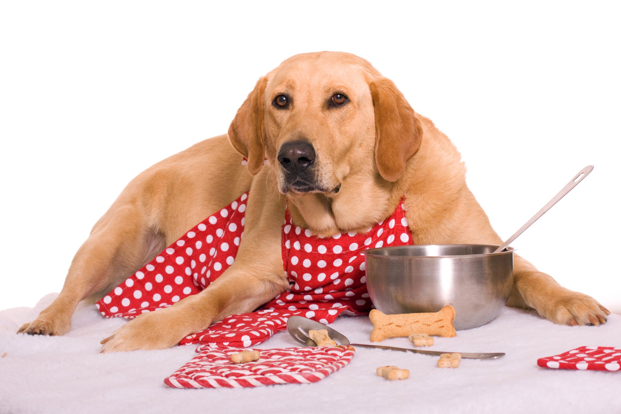 Che cibo scegliere per il nostro cane e come somministrarglielo