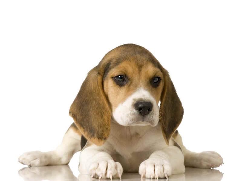 Cuccioli: dalla nascita allo svezzamento