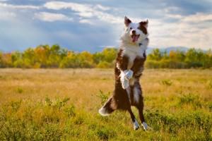crocchette per cani migliori
