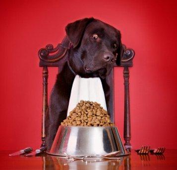 Allergie e intolleranze alimentari nel cane: cause, sintomi e rimedi