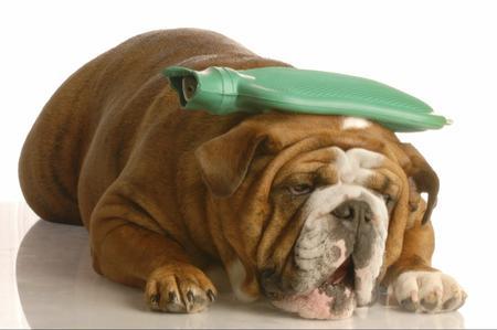 Diarrea nel cane: cause e trattamento