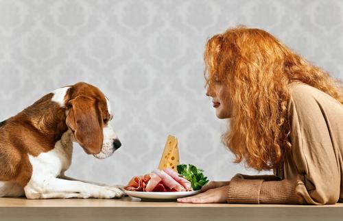 Displasia dell'anca e Alimentazione del Cane