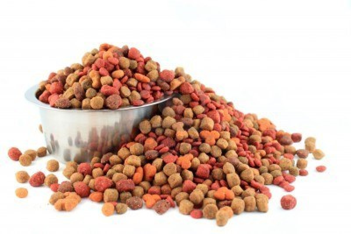 Indagine Anmvi, per 85% 'pet food' meglio di dieta casalinga