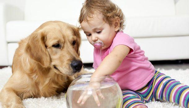 Animali domestici, sono 60 milioni nelle famiglie italiane, si punta al riconoscimento in società